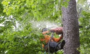 Tree Removal Louisville KY